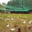 Jajka wiejskie wolny wybieg pastwiskowe swojskie